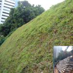 erosion-control-slope-008
