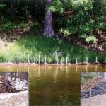 shoreline-streambank-008