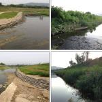 shoreline-streambank-012